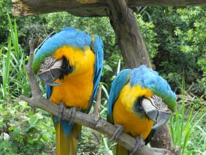 Chocolatal Bird Watching Tour Packages