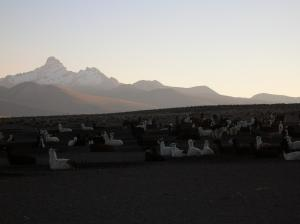Sajama - Private Tour Packages